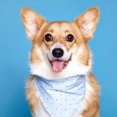 Cotton scarf (sky blue) for pet