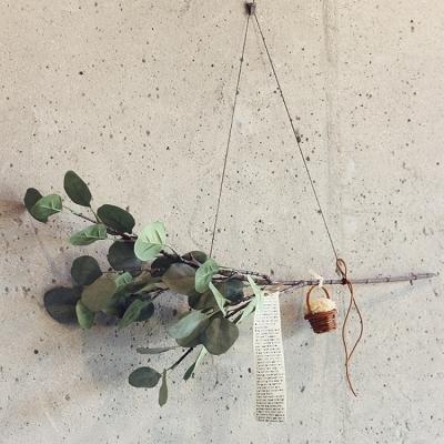 둥근잎 유칼립투스 유카리 폼폼가렌드